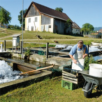 Fischzucht Marzi