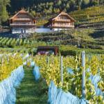 Weingut Karnburg